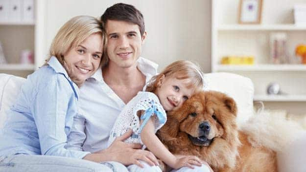 Wills & Trusts dog-young-family Direct Wills Dorset
